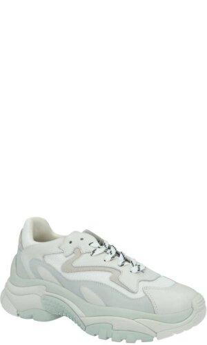 ASH Sneakersy Addict